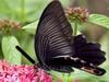 美丽蝴蝶找字母