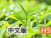 采茶纪中文版