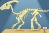 组装恐龙标本