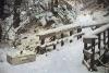 大雪中丢失的宠物