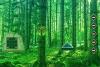 逃离针叶林景观