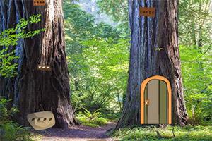逃离山毛榉树林